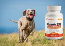 Glucosamine Ultra Pealthy Pets – Veterinarian Recommended All-Natural Hip and Joint Health Supplement for Dogs of All Sizes